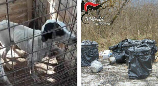 persone,cani, 53enne denunciato